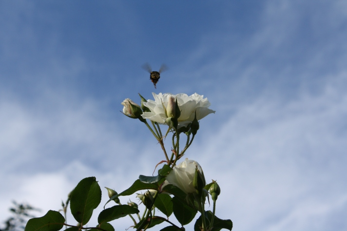 ©SME Taken in my Mother-in-Law's garden in 2010