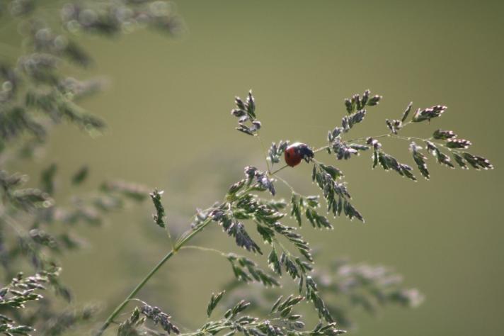 Ladybug_in_schoolyard_
